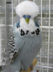 gris 2