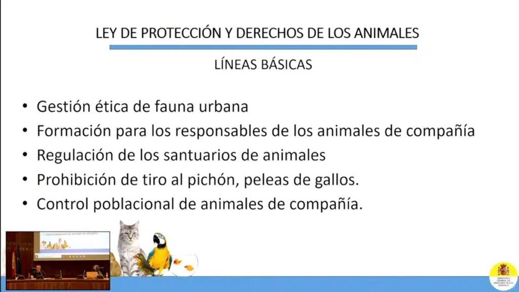 ley-de-bienestar-animal-1024x576.jpg