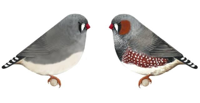 Pareja-de-grises-FINAL-2